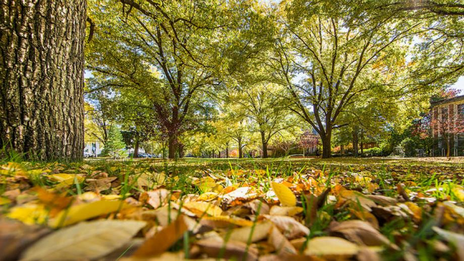 ANU Fellows Garden - autumn leaves on the ground